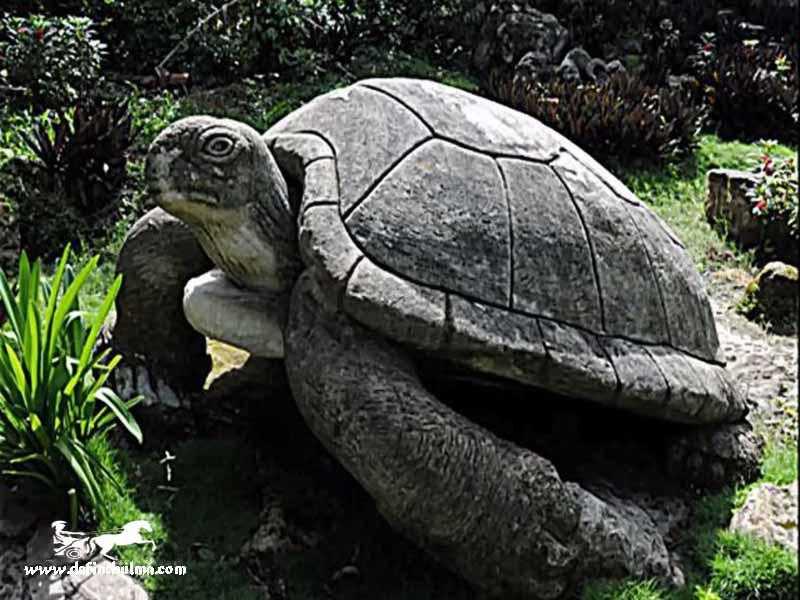 definede kaplumbağa işareti